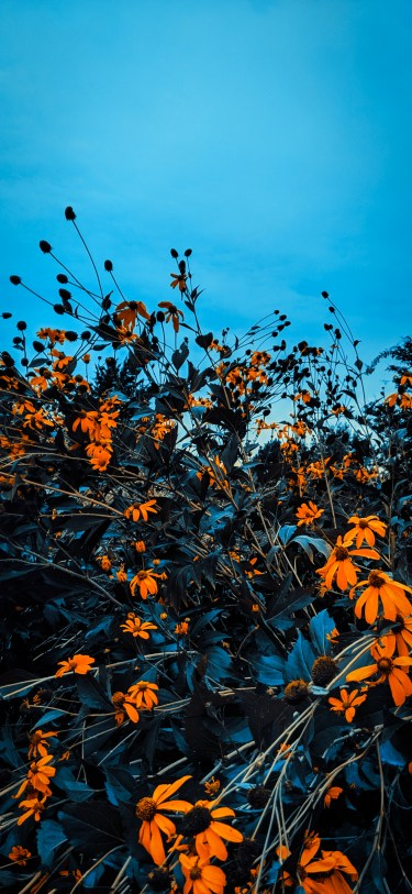 Fall leaves iPhone wallpaper wallsbyjfl 5