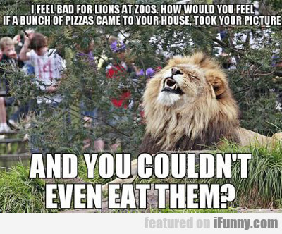 I Feel Bad For Lions At Zoos...