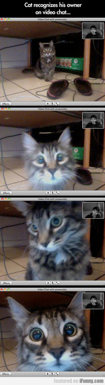 Cat Recognizes His Owner On Videochat