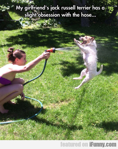 My Girlfriend's Jack Russell Terrier Has A...