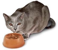 cat%2Beating.jpg
