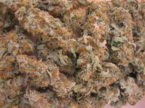 /home/html/media/img/photos/2009/03/01/medical_marijuana.jpg