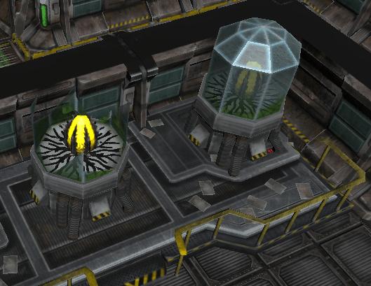 Egg Chamber