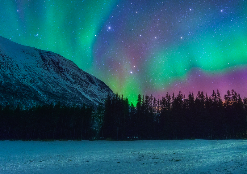 Latin Name Northern Lights