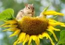 Quand été rime avec biodiversité