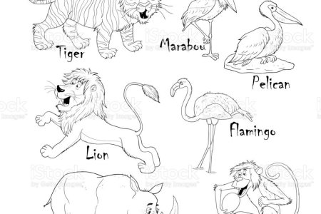 Coloring Pages Animal Hippo Family Animals African Rainforest