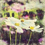 Abstract Beautiful White Flower Blooming On Oil Painting Background Digital Picture Convert To Art Stock Photo Download Image Now Istock