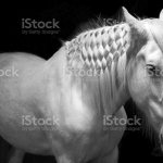 Black White Horse Stock Photo Download Image Now Istock
