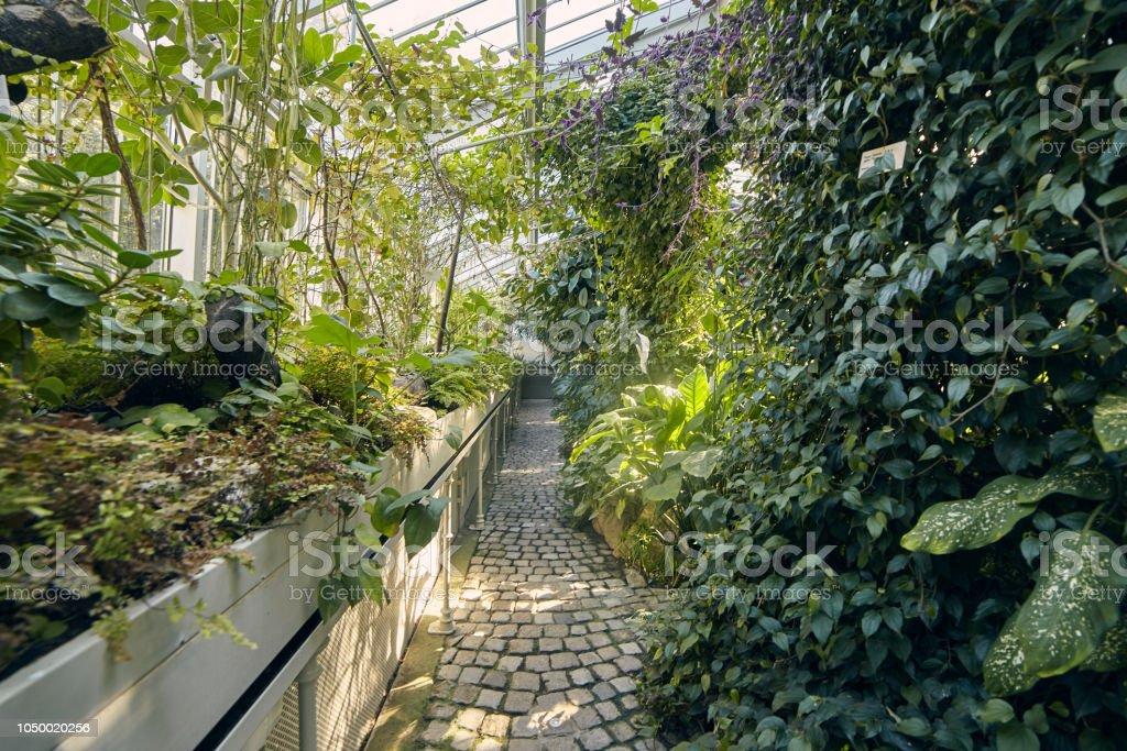 https www istockphoto com fr photo jardin botanique c3 a0 lint c3 a9rieur en serre v c3 a9g c3 a9tation tropicales plantes belgrade serbie gm1050020256 280799673