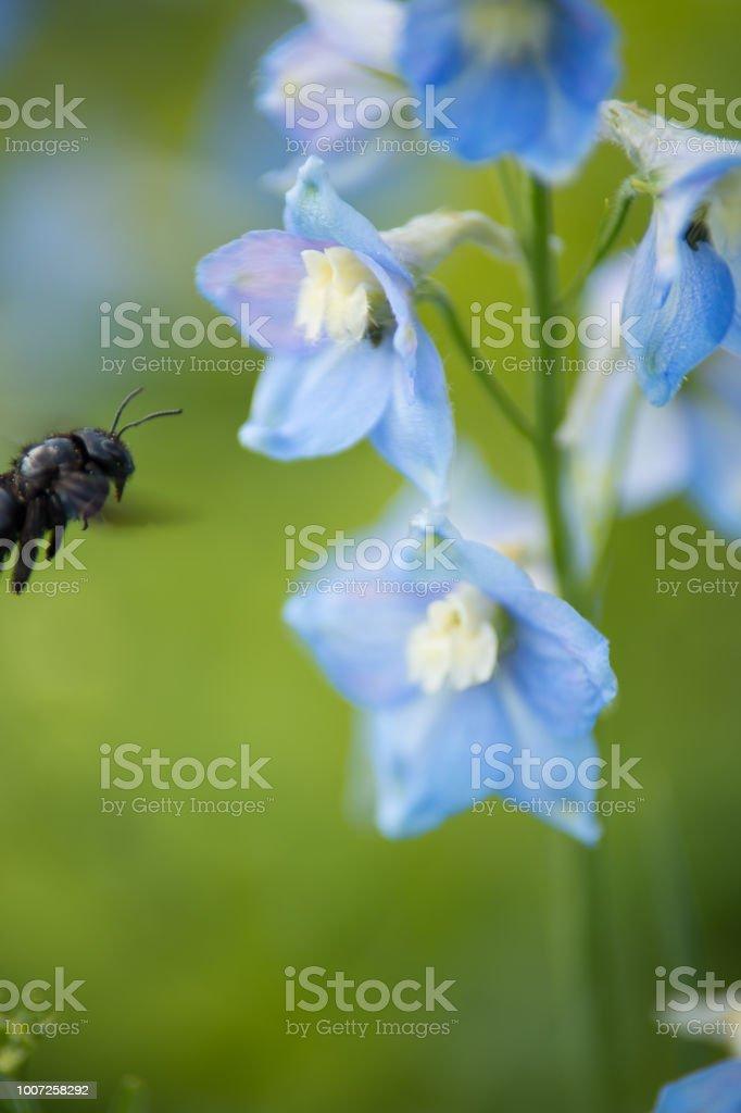 https www istockphoto com photos fleur noir