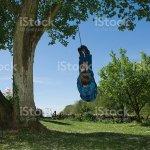 Boy Playing On Tree Swing In Backyard Stock Photo Download Image Now Istock