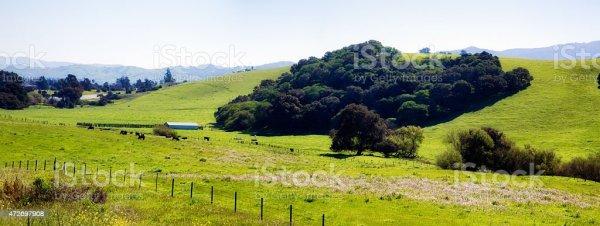 Калифорния Пастбища Панорама Живописный Холм С Скот ...