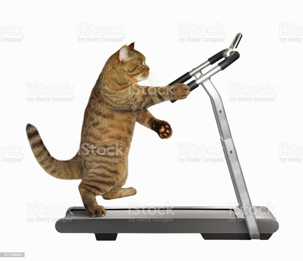 photo libre de droit de athlete de chat sur un tapis roulant banque d images et plus d images libres de droit de activite istock