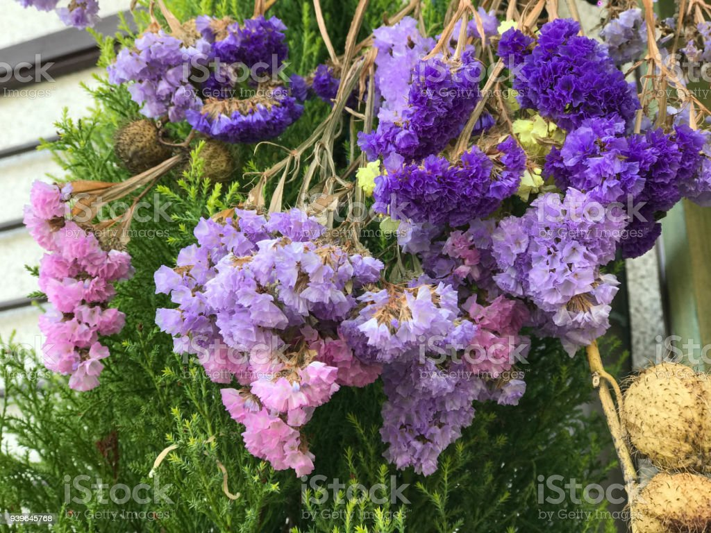 Colorful Statice Flowers Also Known As Limonium Or Sea Lavender     Colorful Statice flowers also known as limonium or sea lavender  royalty free stock photo