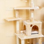 Cute Funny Cat Tree In The Living Room Stock Photo Download Image Now Istock
