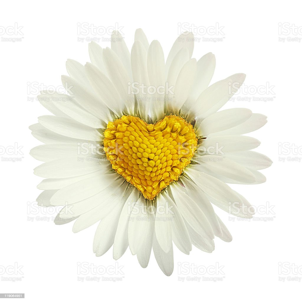 White daisy flower clip art izmirmasajfo