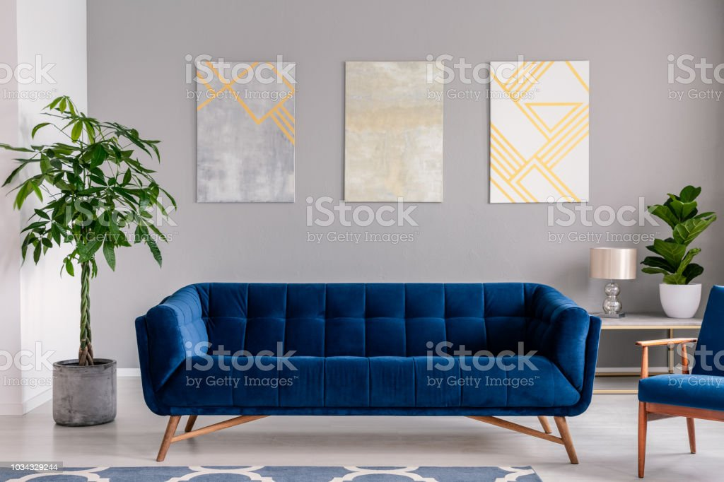 A Dark Blue Velvet Couch In Front Of A Gray Wall With Graphic Paintings In A Modern Living Room Interior Real Photo Stock Photo Download Image Now Istock