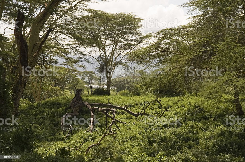 Unpaved forest road runs images, illustrations and vectors perfectly priced to fit your projects budget. Dense Forest In Tanzania Foton Och Fler Bilder Pa Afrika Istock