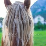 Funny Looking Horse With Long Hair Stock Photo Download Image Now Istock