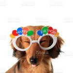 Happy Birthday Puppy Stock Photo Download Image Now Istock