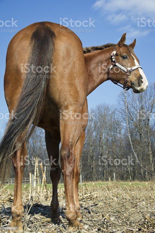 Лошадь Сзади Фото