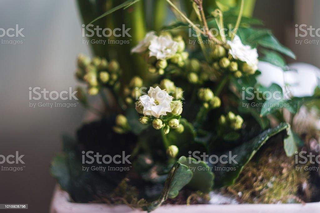 photo libre de droit de plantes dinterieur avec de belles fleurs blanches sur le rebord de la fenetre en hiver banque d images et plus d images libres de droit de angiosperme istock