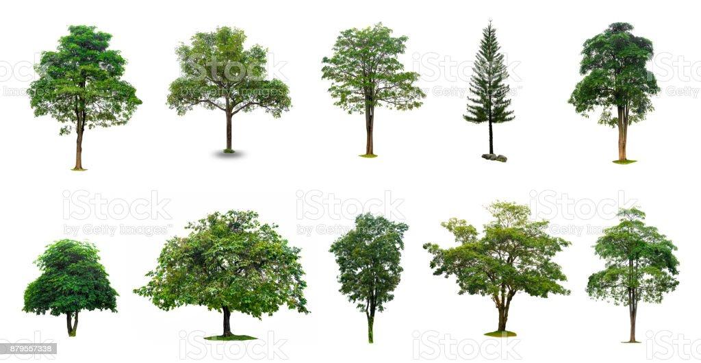 photo libre de droit de travaillent les arbres isoles sur fond blanc collection darbres isoles sur fond blanc convient pour une utilisation dans la conception architecturale decoration banque d images et plus d images