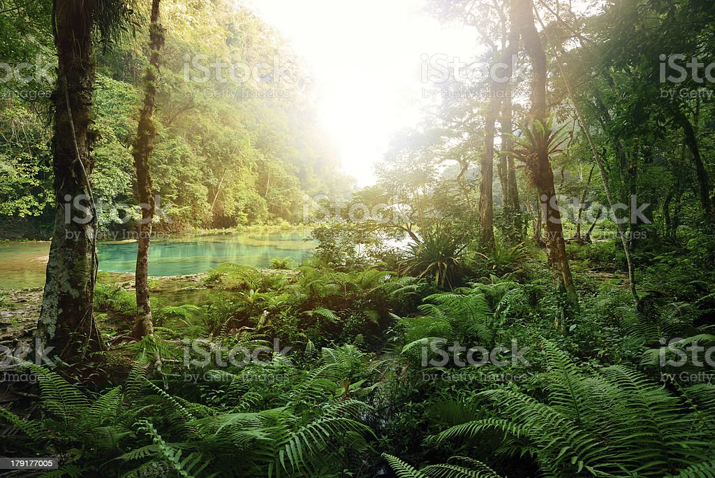 Royalty Free Tropical Rainforest Pictures, Images and ...