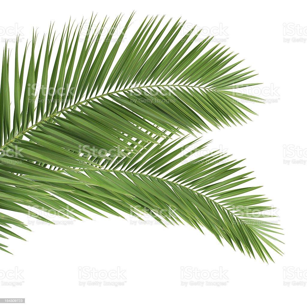 https www istockphoto com fr photos feuille de palmier