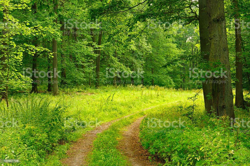 These forests are found in. Path Through Deciduous Forest Foton Och Fler Bilder Pa Dag Istock