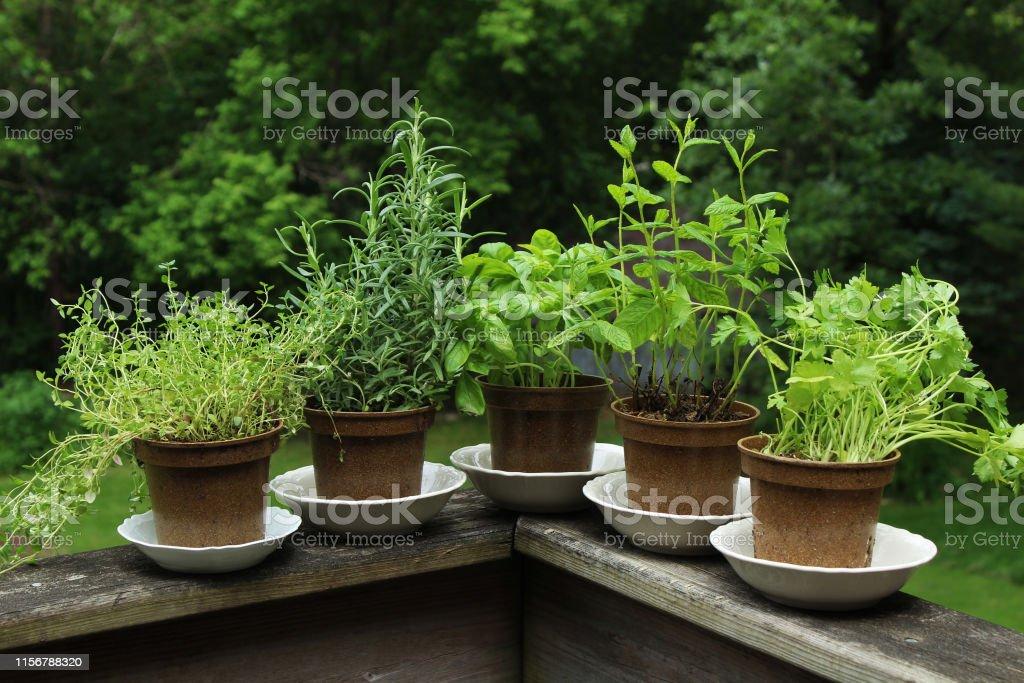 patio herb garden stock photo download image now istock