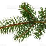 Pine Branch Pinetree Twig Spruce Firtree Decoration For New Year And Christmas Xmas Festive And Holidays Stock Photo Download Image Now Istock