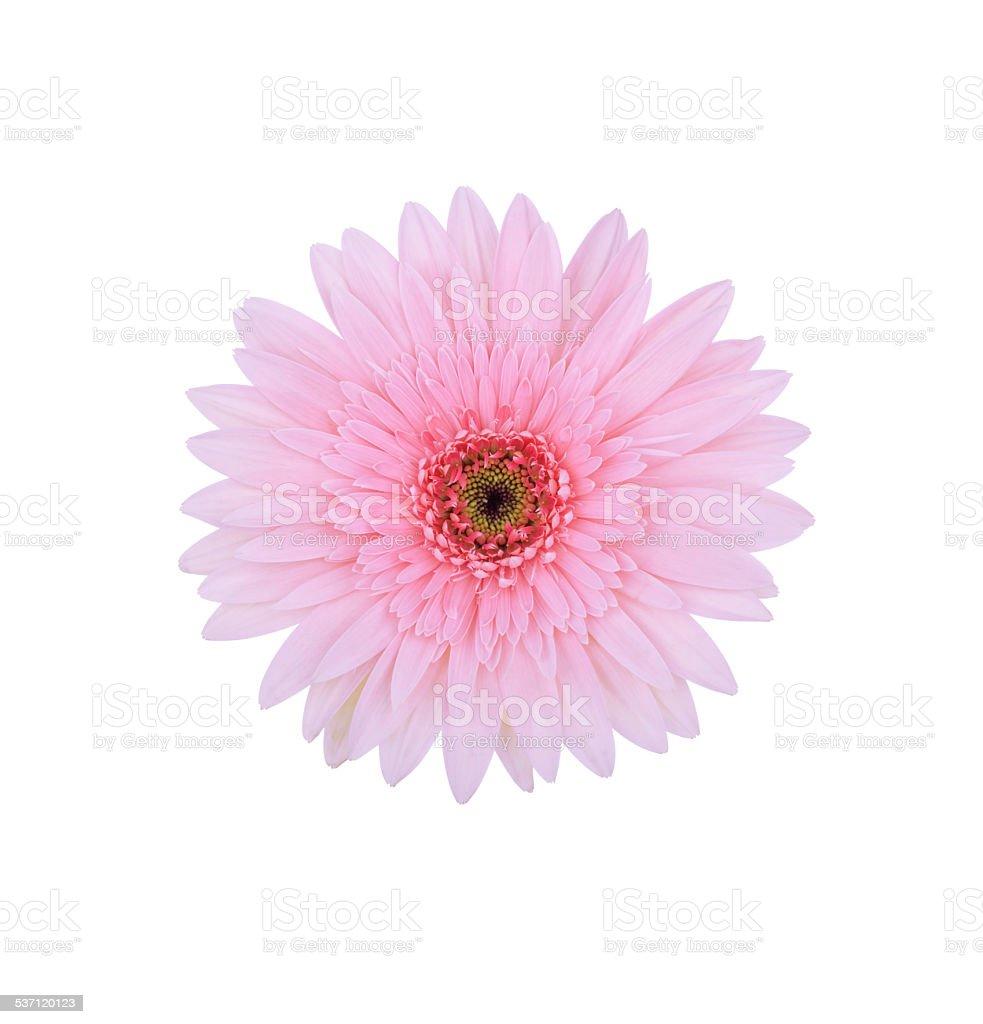 Vertical Flower Arrangement