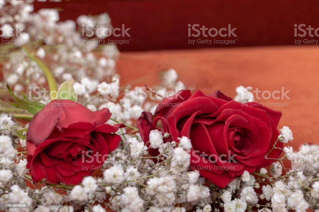https www istockphoto com photo 2 roses rouges sur lit de fleurs blanche de gypsophile pour la saint valentin gm1094904858 293880171