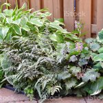Shade Plants Stock Photo Download Image Now Istock