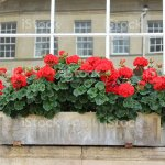 Stone Window Box With Red Flowers Georgian House Stock Photo Download Image Now Istock