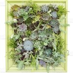 Succulent Wall Hanging Stock Photo Download Image Now Istock