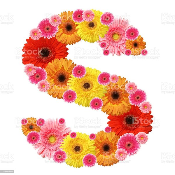 The Letter S Formed Using Flowers Stock Photo - Download ...