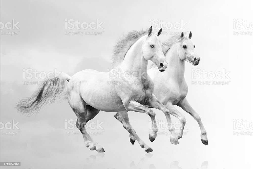 Black And White Pictures Of Horses That Are Beautiful