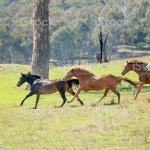 Wild Horses Running Free Stock Photo Download Image Now Istock