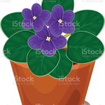 African Violet Flower In Pot Stock Illustration Download Image Now Istock