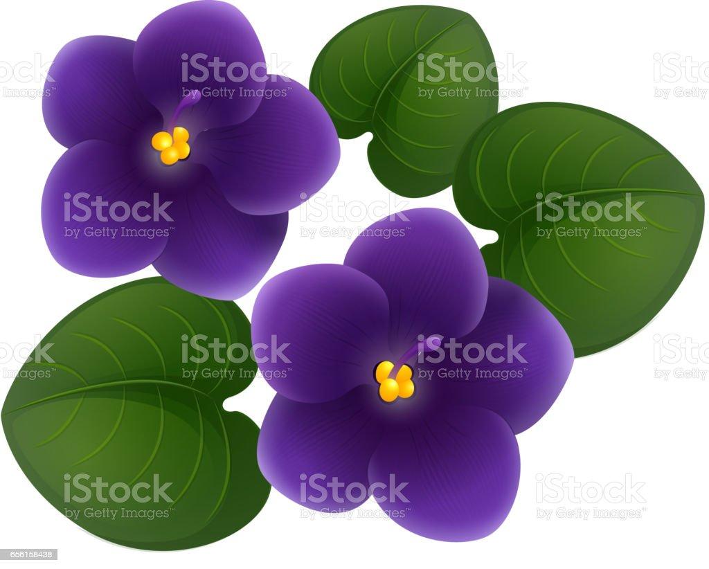Purple jasmine flower vector izmirmasajfo