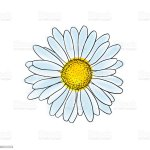 Beautiful Doodle Sketch Daisy Flower With Outline Isolated For Greeting Cards And Invitations Of The Wedding Birthday Valentines Day Mothers Day And Other Seasonal Holiday Stock Illustration Download Image Now Istock