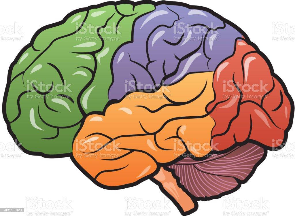 Brain Stem Clip Art, Vector Images & Illustrations