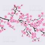 Cherry Blossom Sakura Tree Branch With Realistic Pink Flowers Stock Illustration Download Image Now Istock