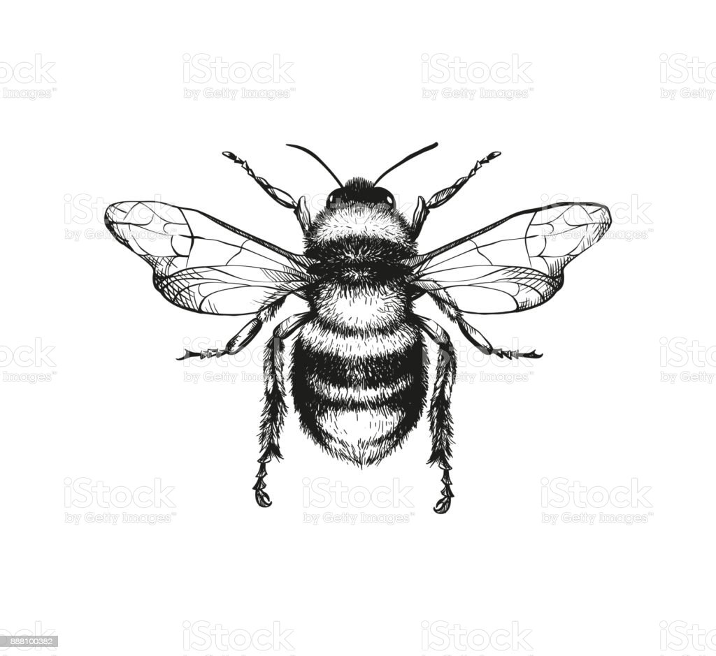 Royalty Free Honey Bee Clip Art Vector Images