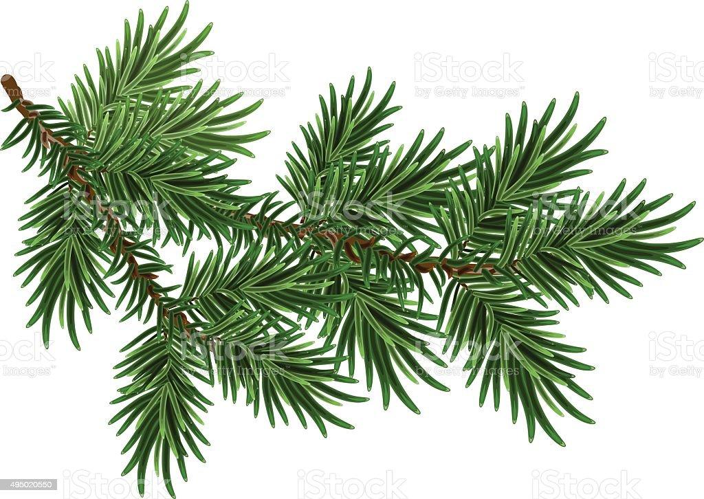 Furtree Branch Green Fluffy Pine Branch Stock Vector Art