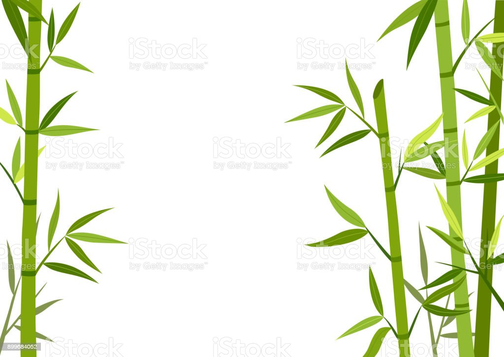 bambou vectoriels et illustrations libres de droits istock