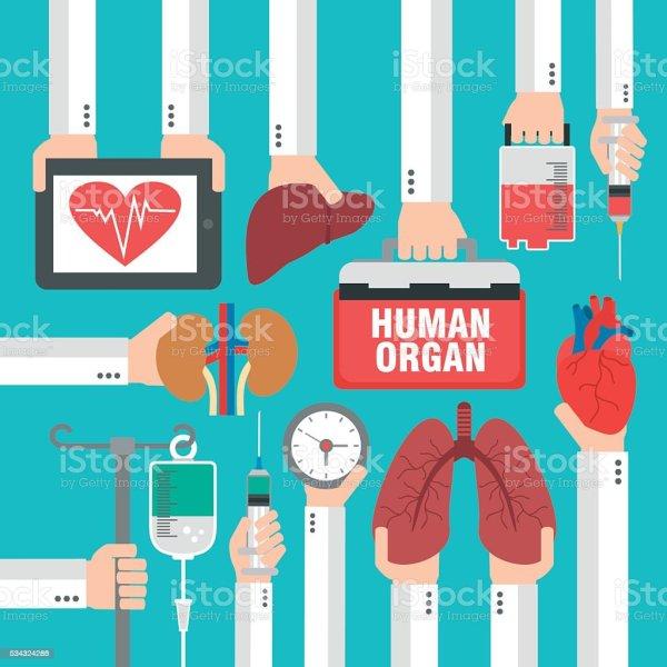 Human Organ For Transplantation Design Flat Stock Vector ...