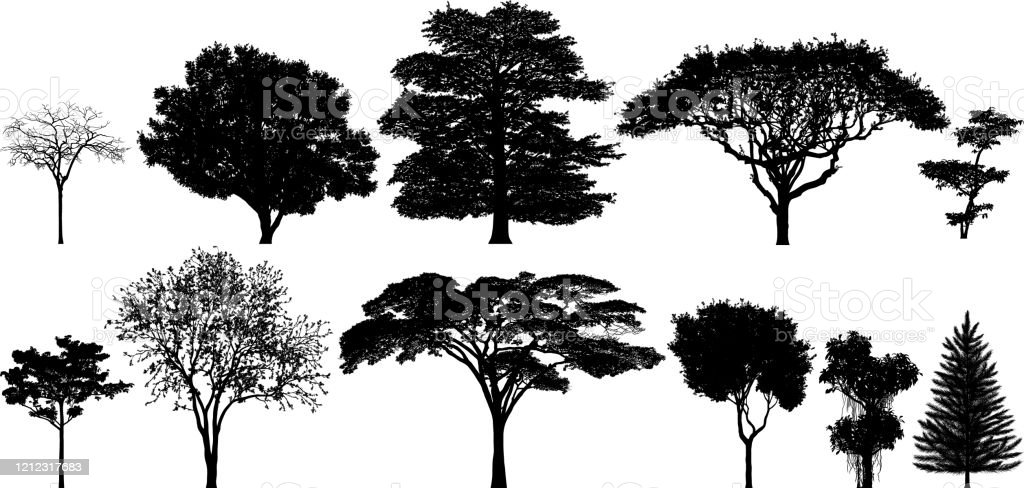 The silhouette of the tarantino is best suited to cleaner lines underneath, like a great pair of skinny jeans and a classic tee. The Silhouette Of A Big Tree With A White Background Vector Image Royalty Free